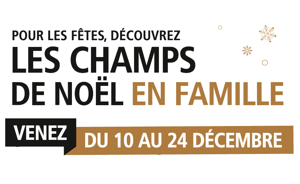 Les animations de Noël dans les Champs